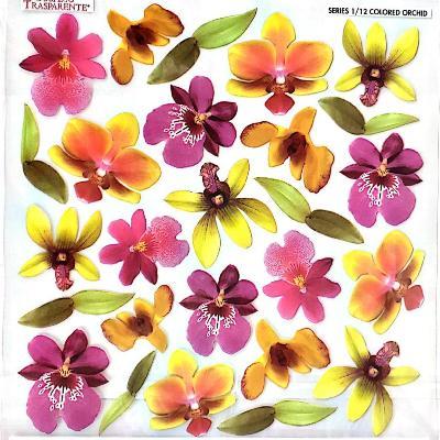 Folie imprimata Sospeso Trasparente 1/12 Colored Orchid 1 buc