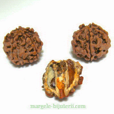 Margele, seminte de rudraksha, maro, 5 muchii, 18-19mm 1 buc