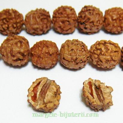 Margele, seminte de rudraksha, maro, 11-12mm 1 buc